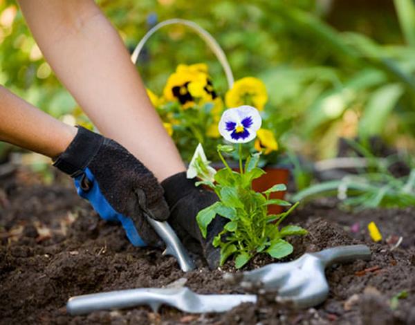 Cursos de jardineiro